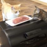 あつしchannel 猫好きにはたまらない幸せすぎる動画公開