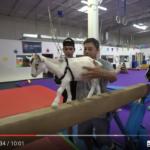 【海外の人気動画】犬vsヤギ本当に運動神経が良いのはどっち?